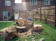 Zoom in: Tree felling and removal